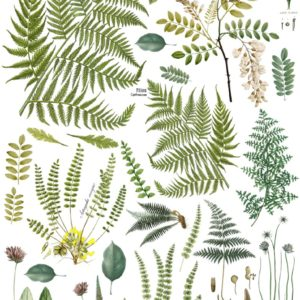 FRONDS BOTANICAL 24×33 DECOR TRANSFER™