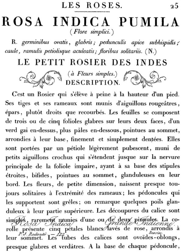 LE PETIT ROSIER 24×33 DECOR TRANSFER™