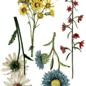 WILD FLOWER BOTANICALS 24×33 DECOR TRANSFER™